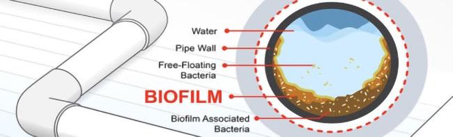 Nước có chứa nhiều vi sinh
