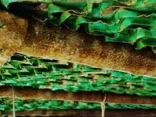 Xử lý tảo, vi sinh