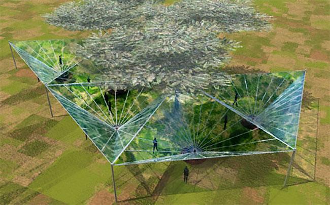 Thu nước từ không khí xung quanh cây nhiều hơn do có độ ẩm cao