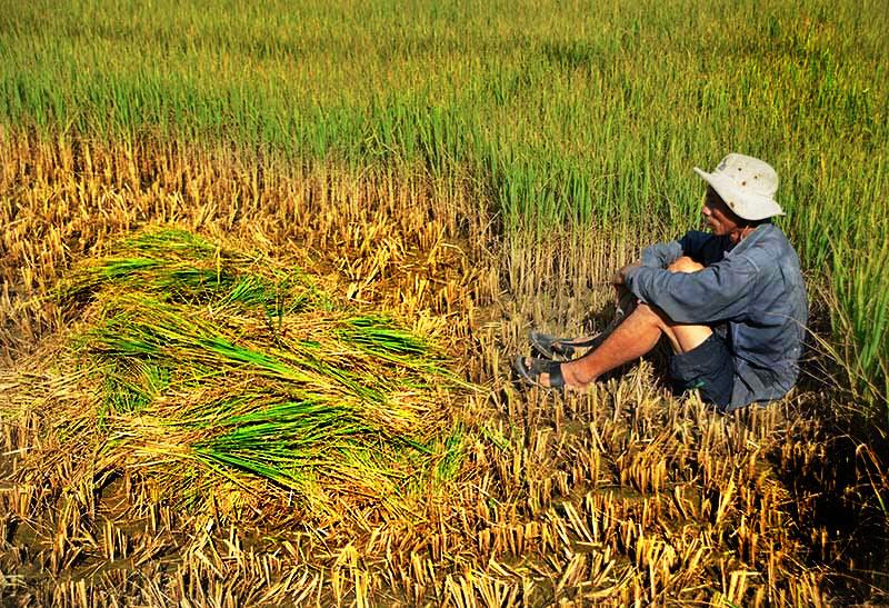 Đất, nước bị nhiễm mặn gây khó khăn cho sinh hoạt, trồng trọt (ảnh 3)