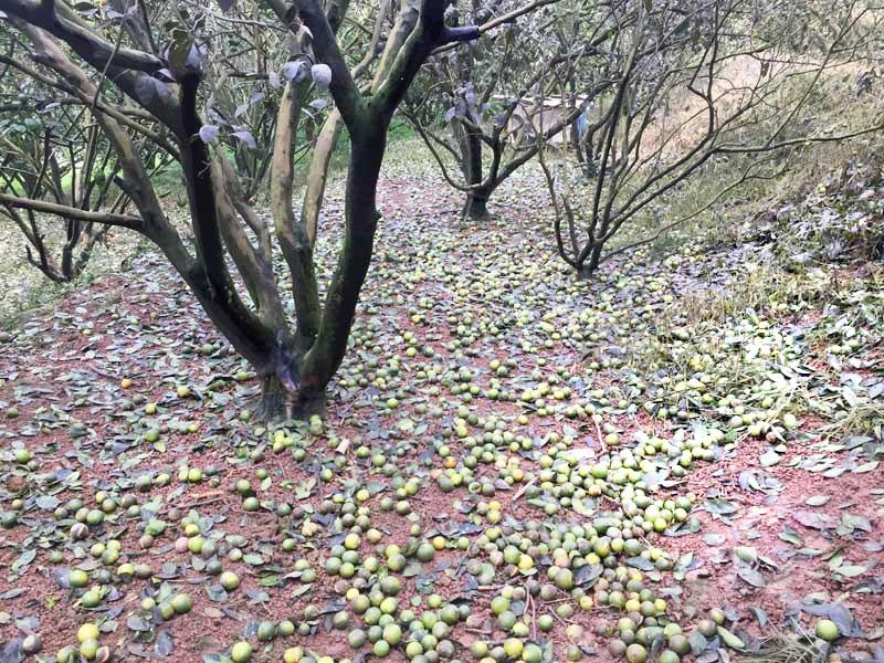 Đất, nước bị nhiễm mặn gây khó khăn cho sinh hoạt, trồng trọt (ảnh 2)