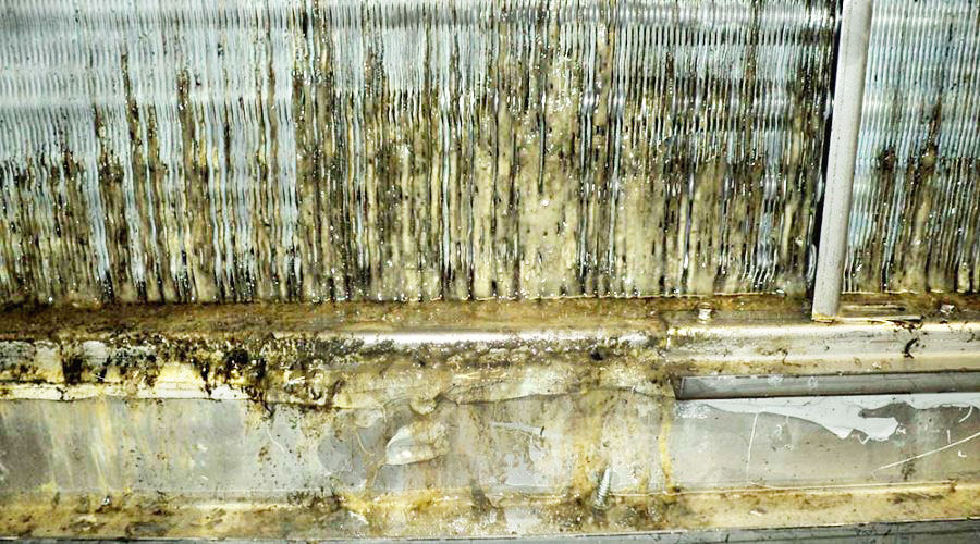 Các dàn Coil bẩn là điều kiện tốt cho Legionella sống và phát triển