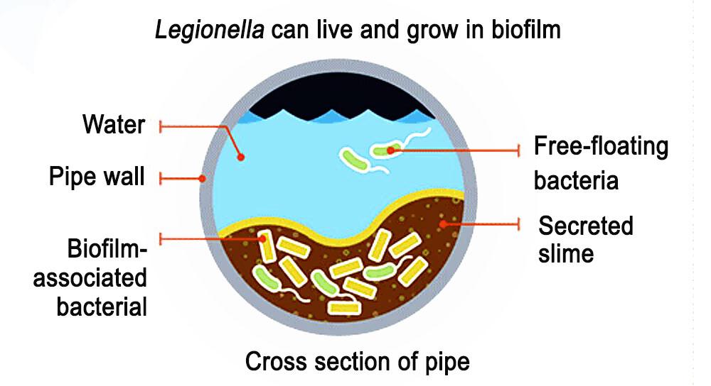 Water pipe containing Legionella